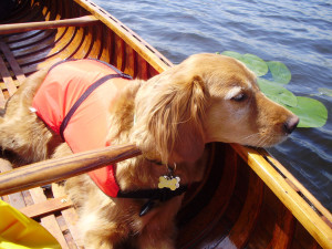 Cookie in the Canoe